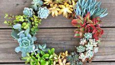 DIY: Simple & Stunning Living Succulent Wreath
