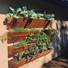 Flower Street Urban Gardens -- veggies
