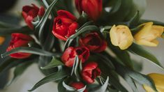 One of many great free stock photos from Pexels. This photo is about red tulips, tulips, yellow Portrait Photos, Buy Flowers Online, Like Image, Flowers Delivered, Red Tulips, Spring Sign, Close Up Photos, Cut Flowers, Free Stock Photos