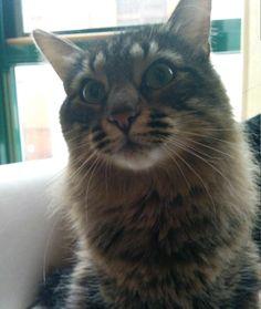 Kat Cat | Pawshake