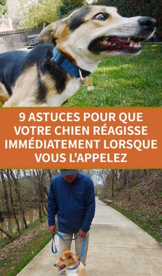 Tricks, Labrador, Life Hacks, Aiko, Dogs, Stress, Dog Activities, Funniest Animals, Funny Animals