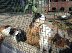 Hamster..they all soo cute