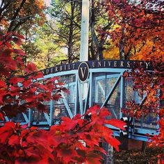 What a beautiful day #vandygram #vanderbilt #bridge #fall #autumn #trees #leaves  by AMY DAM
