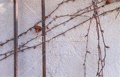 Żelazne pręty i sucha winorośl. Natura vs. architektura #cywilizacja #środowisko #architektura #InteractiveStock