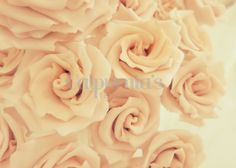 Pink roses sugar florist paste