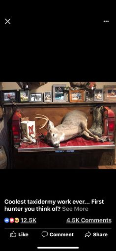 Deer Mount Decor, Deer Decor, Antler Mount, Taxidermy Decor, Taxidermy Display, Hunting Lodge Decor, Hunting Theme Rooms, Whitetail Deer Pictures, Funny Deer