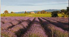 Do francouzské Provence se mimo jiné jezdí za sluncem a vůní levandule. Chcete-li si trošku té idyly dopřávat i doma, omrkněte tento styl a vtiskněte ho třeba do vaší koupelny. Stylus, Provence, Vineyard, Outdoor, Outdoors, Style, Vine Yard, Vineyard Vines, Outdoor Games