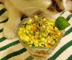 "Better than Grass"" Salad for Cats. Cats who like to nibble grass may enjoy these veggies Animal Help, Curious Cat, Pet Treats, Cat Recipes, Diy Stuffed Animals, Crazy Cats, Pets, Pet Care, Homemade"