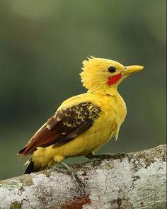 Kinds Of Birds, Birds 2, Pretty Birds, Beautiful Birds, Pink Daisy, Bird Art, Bird Feathers, Animal Pictures, Cute Animals