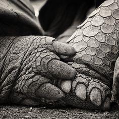 Turtle Love ~ Photo by Sam Dobson~♛