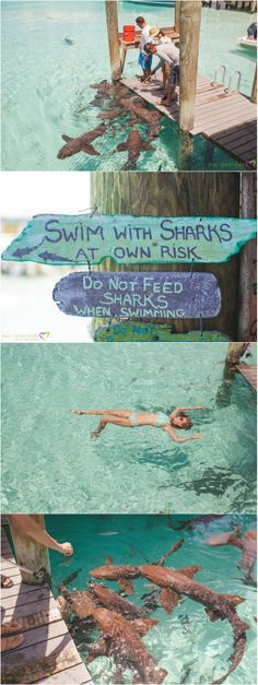 Compass Cay Exumas Bahamas Swimming with sharks  Blog | Eve Greendale Photography | Palm Beach Portrait Photographer