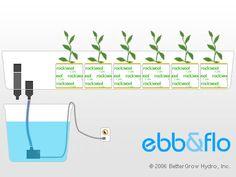 Ebb & Flow System