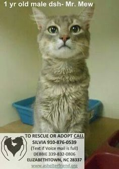 Super Urgent: ON EUTH LIST FOR THURS 9/4/14. 30 animals came into shelter today (9/3), SHELTER IS OVER FULL. RESCUE, ADOPT PLEASE OR THEY DIE!