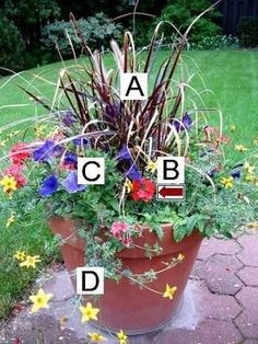Container Flower Gardening Ideas: A = Purple Fountain Grass, B = Red Verbena, C = Blue Petunias, D = Peters Golden Carpet