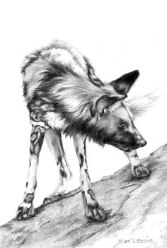 Grrrr - African Wild dog