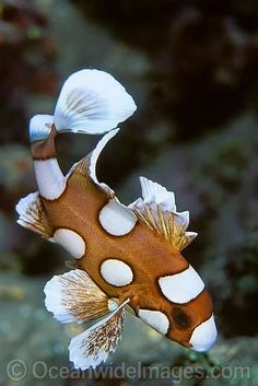 Saltwater Aquarium Fish - Find incredible deals on Saltwater Aquarium Fish and Saltwater Aquarium Fish accessories. Let us show you how to save money on Saltwater Aquarium Fish NOW! Underwater Creatures, Underwater Life, Ocean Creatures, Underwater Pictures, Beautiful Sea Creatures, Animals Beautiful, Fauna Marina, Salt Water Fish, Water Animals