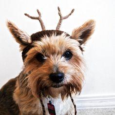 traje de reno para perros mano perro knit hat tamao
