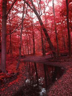 I want to know where this is; it's quite possibly the most hauntingly pretty forest I've ever seen.