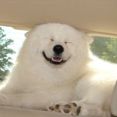 #POLAR #BEAR or #DOG??? you be the judge!!!!