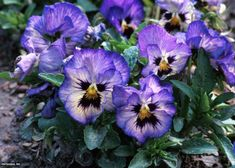 13 Can't-Kill Flowers for Beginners | HGTV Diy Garden, Garden Boxes, Spring Garden, Garden Ideas, Garden Gifts, Gardening For Dummies, Gardening Tips, Organic Gardening, Urban Gardening