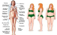 Hypothyroidism Diet - Instead of taking the unhealthy route, try these 3 essential thyroid diet principles to help your body naturally achieve its best thyroid function. - Get the Entire Hypothyroidism Revolution System Today Hypothyroidism Diet, Thyroid Diet, Thyroid Issues, Thyroid Cancer, Thyroid Disease, Thyroid Problems, Thyroid Health, Heart Disease, Thyroid Gland