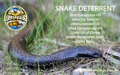 SNAKE DETERRENT – If you have snakes about this is a fantastic recipe.  If your wanting to look after your pets and family, You can spray it along property boundaries, pathways, rock walls, or around the house, sheds, garages, aviaries, etc snakes do not like open spaces and will most likely be found along fence lines, back doors, around house and shed foundations. See our blog for lots more info and where to get the ingredients
