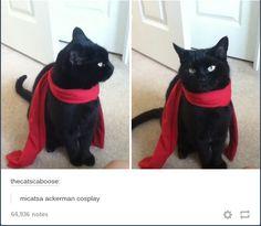 People that think they're funny: Mikatsa Ackerman cosplay Me: NO BETCHES IT'S MIKATSA ACKERCAT