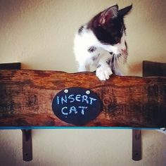 #Winston likes his wall mounted #CatBed I made for him. #DIY #Rescue #HumaneSociety #RecyledPallet #CatShelves @minacious_pearl_