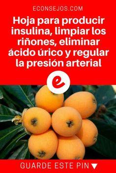 Hojas de nispero   Hoja para producir insulina, limpiar los riñones, eliminar ácido úrico y regular la presión arterial   Hoja para producir insulina, limpiar los riñones, eliminar ácido úrico y regular la presión arterial.