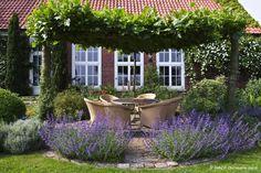 Terras met Lavendel