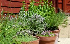 Gardening Tips for Container Gardening Want to do some gardening in your lawns and backyard but don't have much space. Do not worry, try container gardening and overcome this situation, it could be… Best Herbs To Grow, Growing Herbs, Rosemary Growing, Growing Veggies, Herb Pots, Garden Pots, Potted Garden, Hydrangea Garden, Herbs Garden
