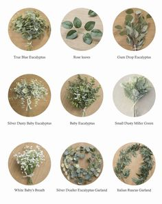 Greenery Best Sellers Collection – Ling's moment of wedding flowers Greenery Best Sellers Collection Types) Wedding Centerpieces, Wedding Bouquets, Wedding Decorations, Flower Centerpieces, Eucalyptus Centerpiece, Eucalyptus Garland, Stage Decorations, Centerpiece Ideas, Wedding Color Schemes