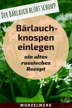 Bärlauch-Rezept: Mit diesem Rezept kannst du auch die Knospen haltbarmachen. Ein Rezept für Bärlauchpesto gibt's noch obendrauf. Viel Spaß beim Bärlauch-Sammeln! :)