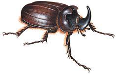 Introduction to Beetle - Beetle | HowStuffWorks