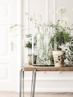 10 Magical Indoor Plants To Attract Love, Joy And Prosperity! - galadarling.com