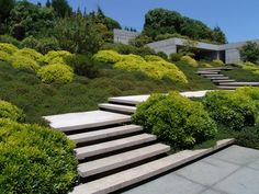 juan grimm paisajismo / jardín papudo, chile / nice floating steps up the hill; undulating plants cover slope