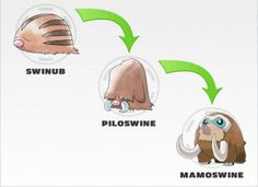 Swinub evolution
