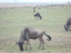 7 days masai mara lake nakuru amboseli safari offer Nairobi CBD - image 2
