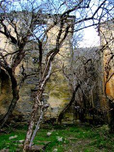 Maleza y ruinas