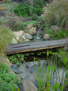 pond for rain catchment