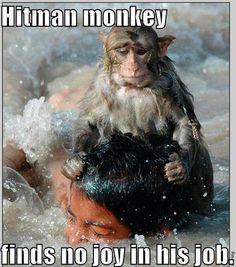Hitman Monkey.