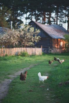 Country Greens and Browns - A simple day. and then the chickens come home to roost. Country Farm, Country Life, Country Girls, Country Roads, Country Living Uk, Gallus Gallus Domesticus, Future Farms, Decoration Inspiration, Country Scenes