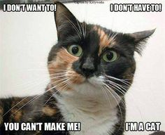 I'm a cat! - somebody has an excellent  Understanding of how cats process and reason out, our simple(we think, requests and expectations) In particular, the quirky catitudes of a female calico cat. Love this  Picture, the expression is priceless.