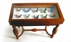 ON SALE Miniature Butterfly Display Case by LDelaney on Etsy What a beautiful addition to any room in your dollhouse! This slanting walnut display case would be perfect for the miniature lepidopterist in your life. It features a colorful assortment of 3D miniature butterflies, created using photos of real butterflies. Each butterfly is labeled with a real antique label (writing is so small that it is not legible!). The exotic specimens are housed in a beautiful Bespaq Gallery Walnut Display…