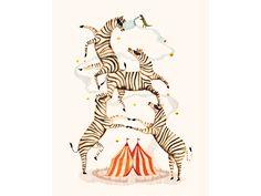 zebra bandits