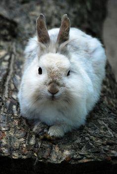 166\367. Fat rabbit | Flickr – Compartilhamento de fotos!