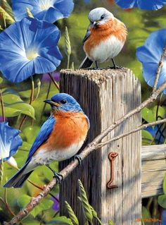 Diamond Painting Eastern Blue Birds kit offered by Bonanza Marketplace. Pretty Birds, Beautiful Birds, 5d Diamond Painting, Bird Drawings, Bird Pictures, Colorful Birds, Wildlife Art, Wild Birds, Bird Art