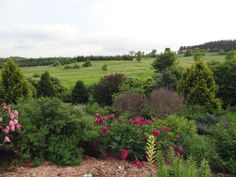 Garden view looking southwest at Spring Valley Roses.