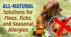 Fleas and ticks hate this more than chemicals, and it's not toxic, so spritz this mixture on your pet and only use chemicals in certain specified situations. http://healthypets.mercola.com/sites/healthypets/archive/2017/05/14/fleas-ticks-seasonal-allergies.aspx?utm_source=facebook.com&utm_medium=referral&utm_content=facebookpets_lead&utm_campaign=20170514_fleas-ticks-seasonal-allergies