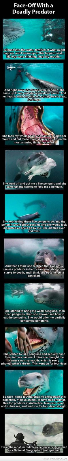 Friendly Leopard Seal Tries To Teach Photographer To Hunt  Yep. I'm going to cry now